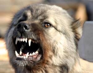 Собачья проблема города Щелково